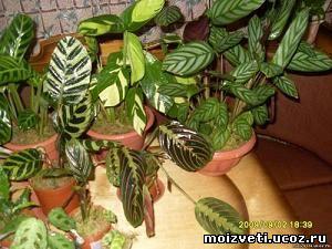 Человека но и для комнатных растений